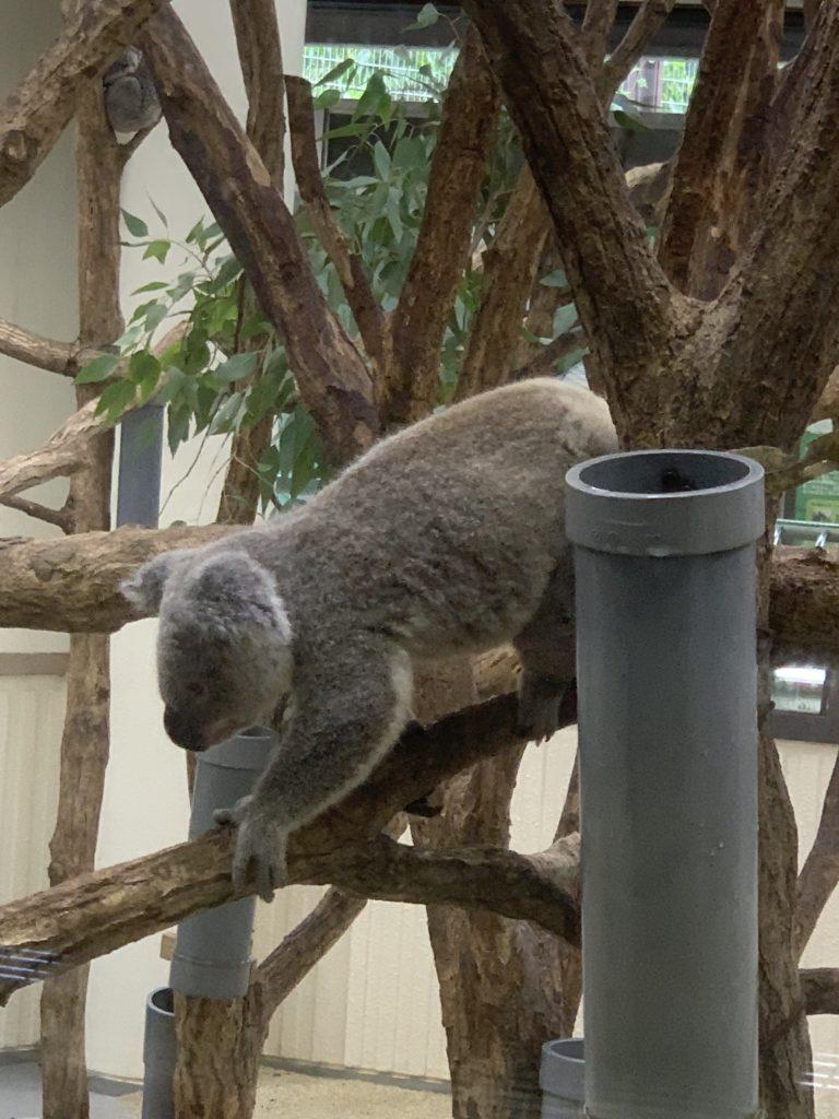 クアッカワラビーin埼玉こども自然動物園