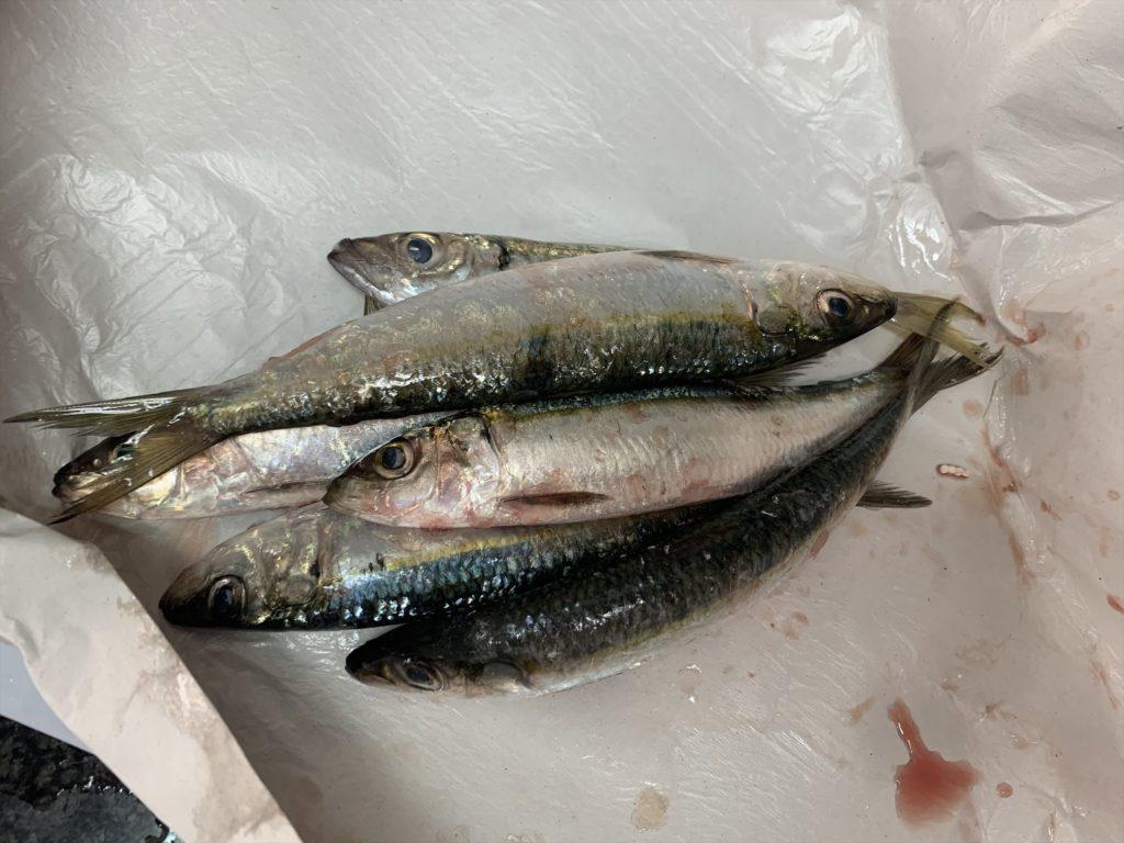 スペイン生活メルカドーナで魚を買う