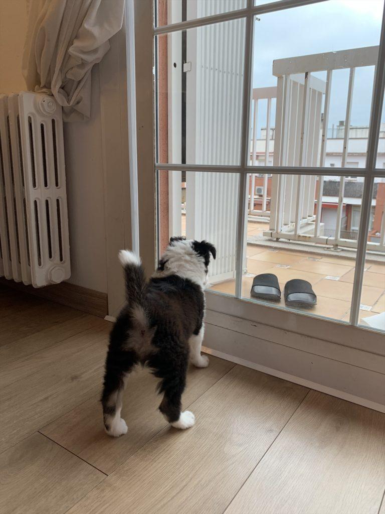 バルセロナでの愛犬ボーダーコリーとの生活ブログ