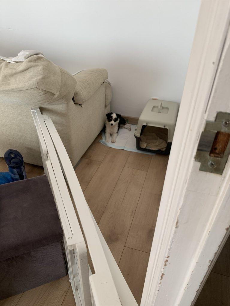 スペインで犬を飼う、日台夫婦ブログ
