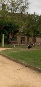 バルセロナのシウタデラ公園へお散歩
