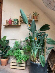 Billy Brunch & Garden