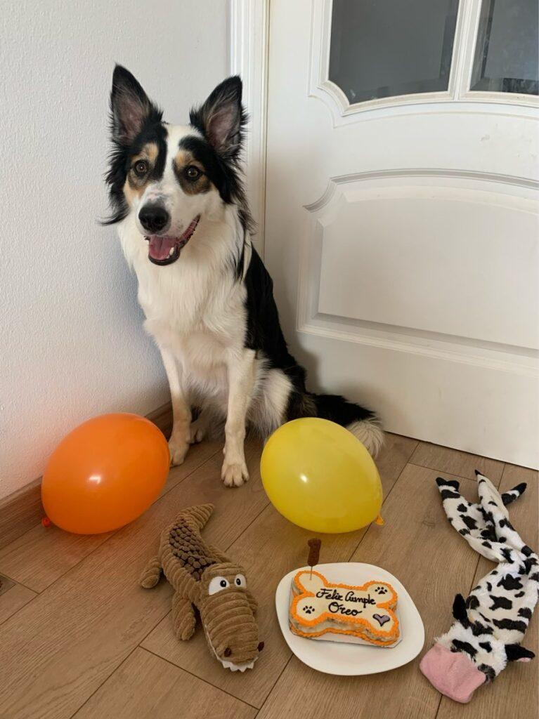 スペインでボーダーコリーの愛犬のお誕生日会