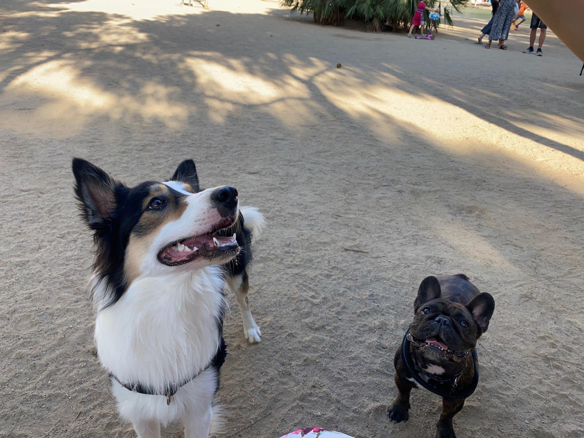 バルセロナで犬を飼うブログ